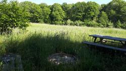 Zicht op het veld van de buren en het (wandel)bos achteraan de tuin