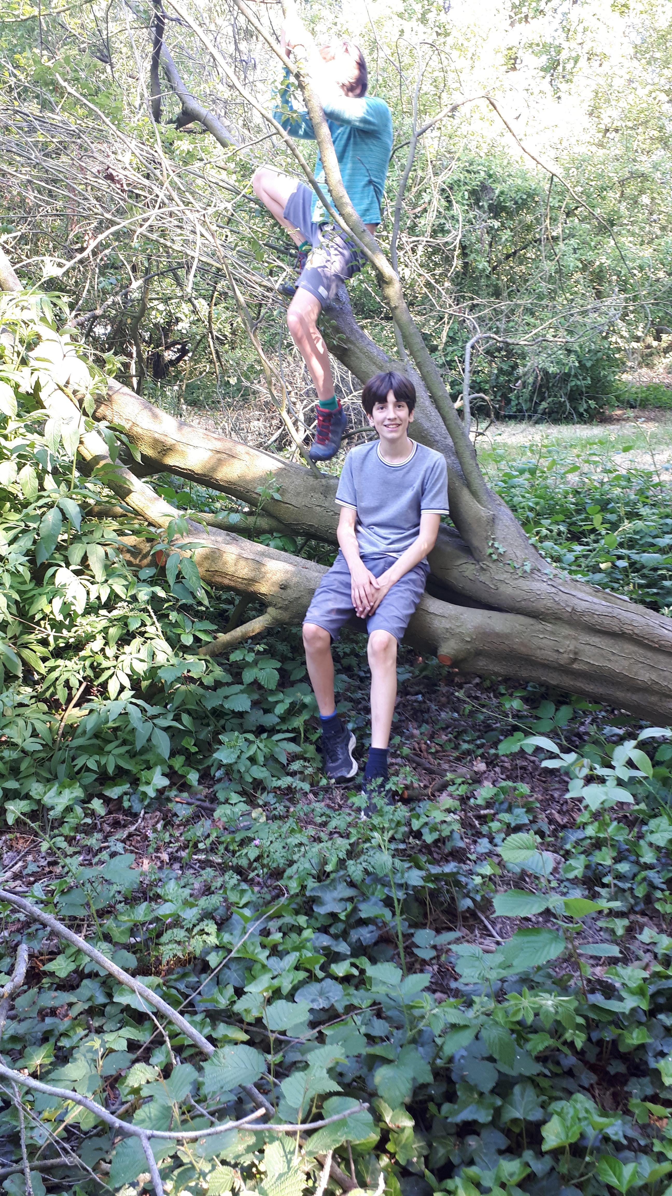 werd een klauterboom of zitplek
