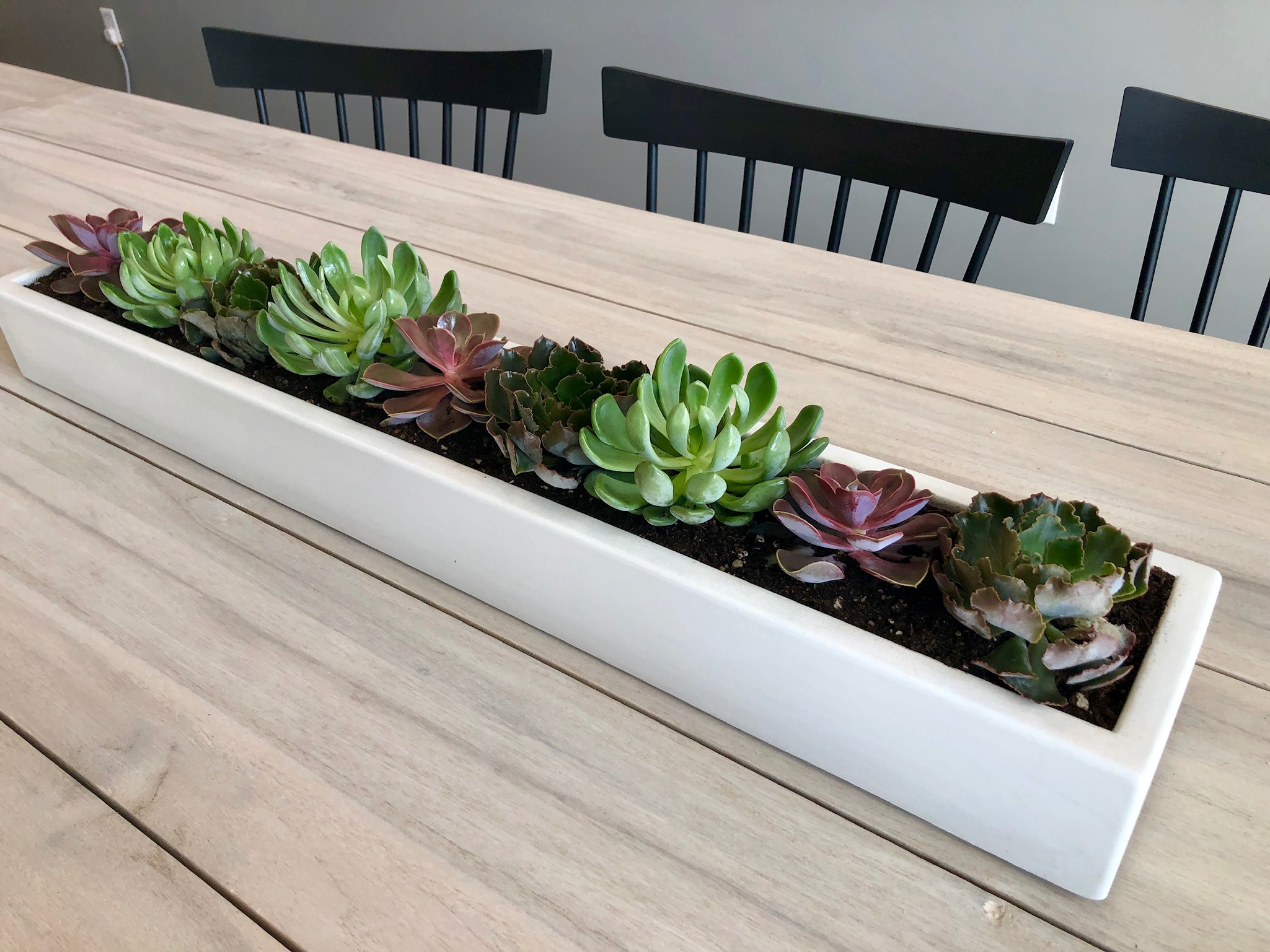 Succulents in White Cement Rectangle