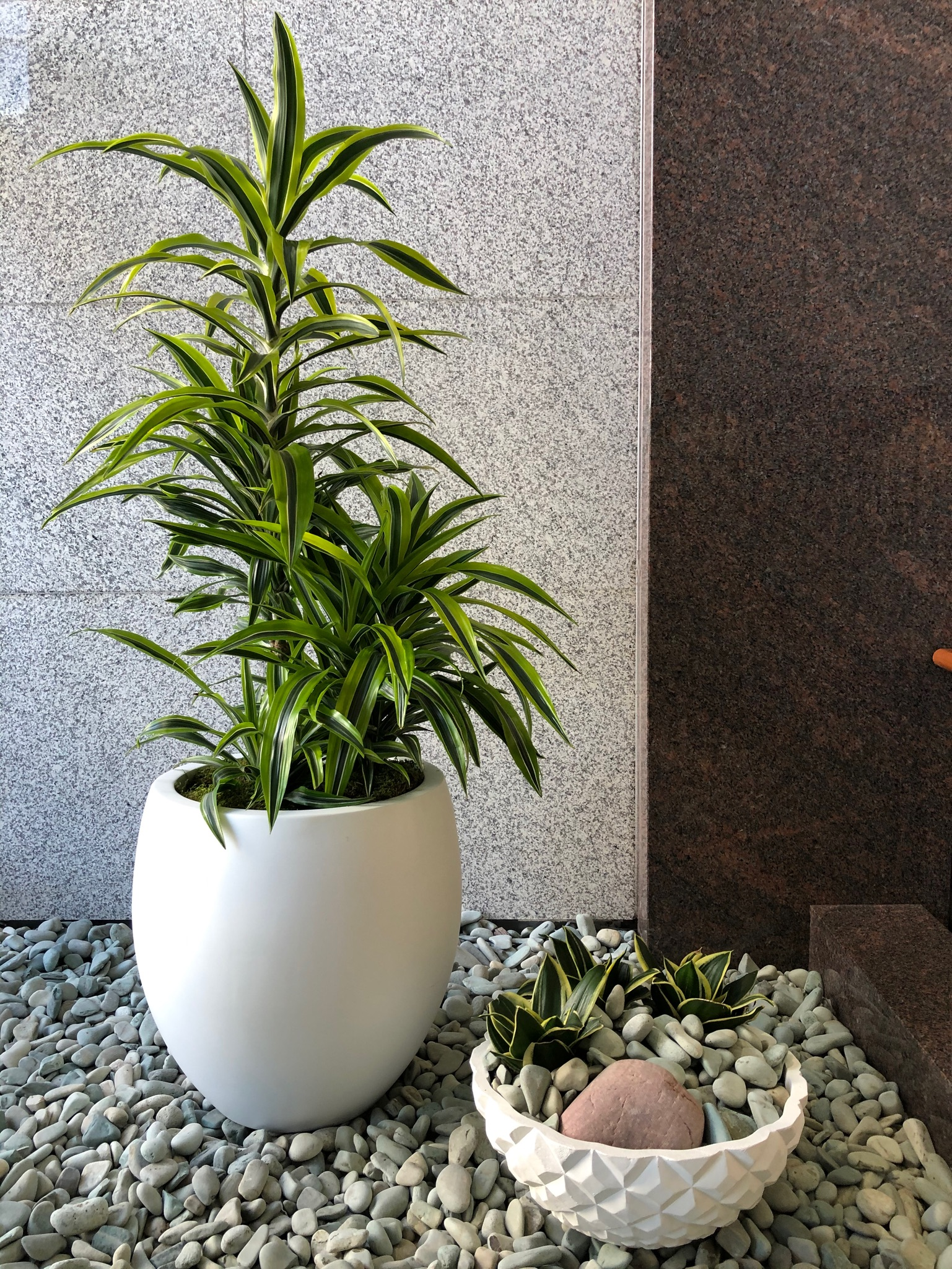 Dracaena Lemon Lime and Asian Beach Pebble