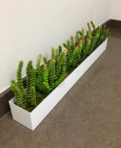 Replica Succulents