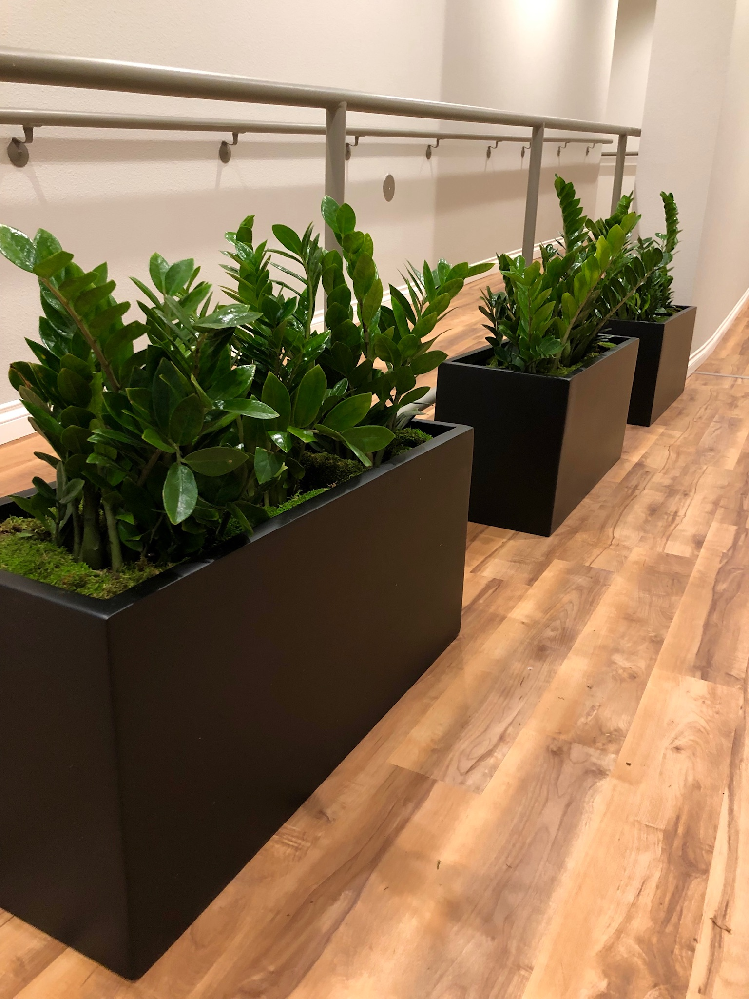 """ZZ Plants"""