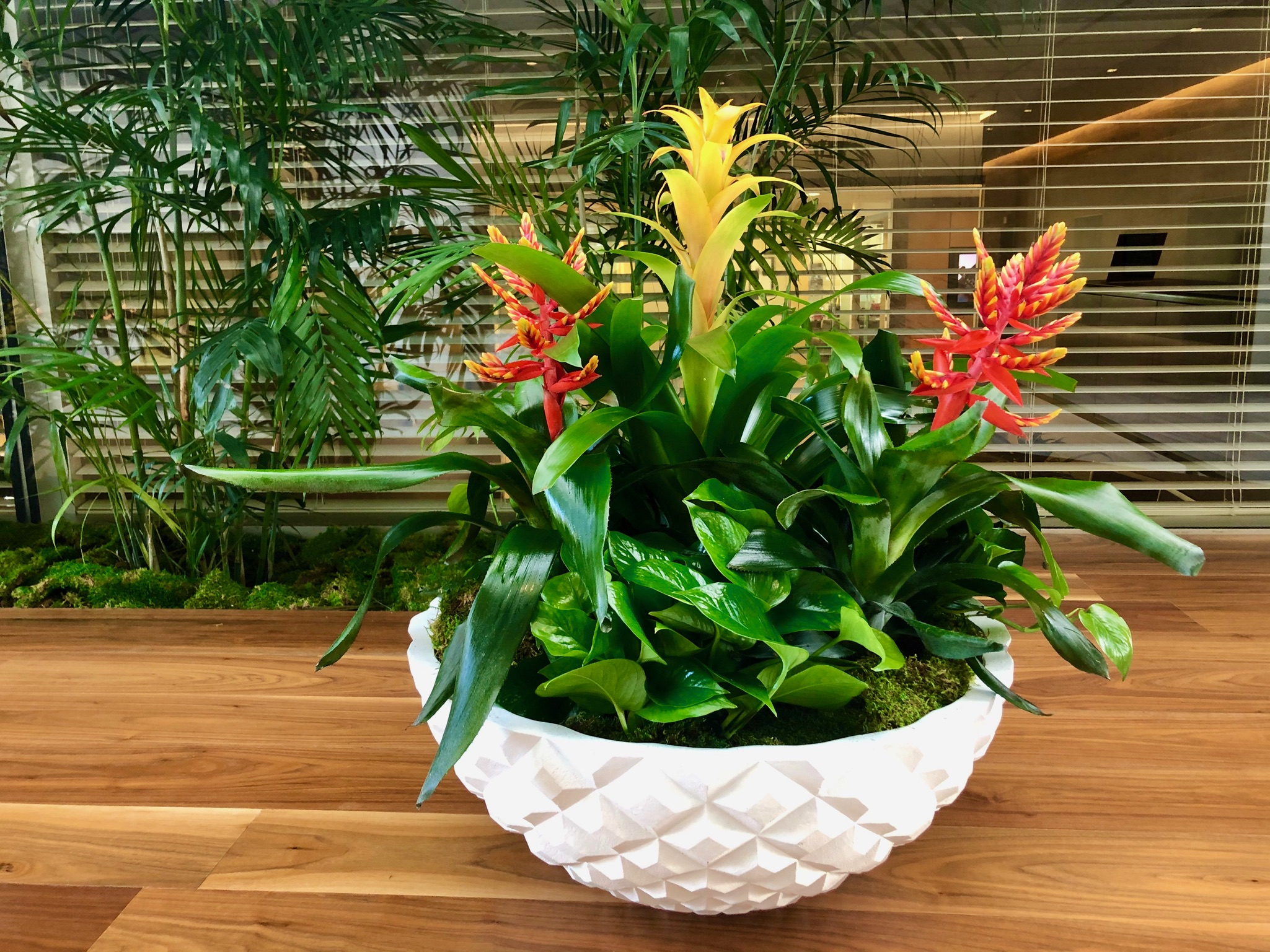 Bromeliad Diamond Bowl with Golden Jade Pothos