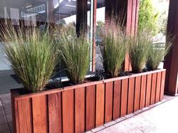 decorative Outdoor Grass