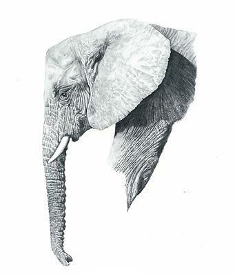 Arfican Elephant.jpg