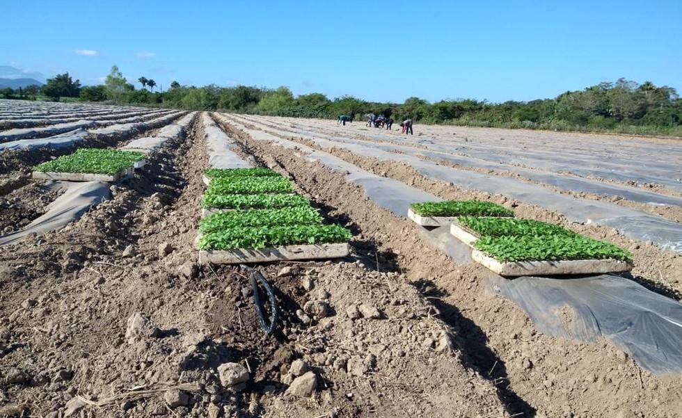 poniendo las plantas en tierras fertiles