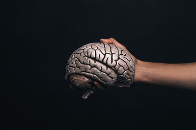 hand-holds-model-brain.jpg