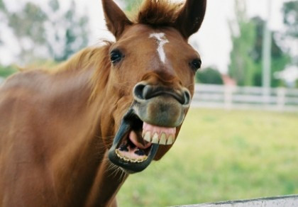 What copywriters actually do? Why not go straight to the horse's mouth!
