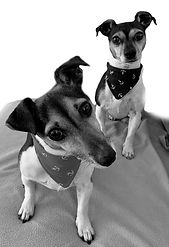Dinky and Nelly dogs