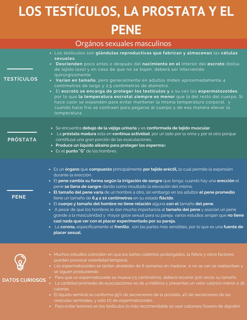 Tésticulos, Prostata y Pene.jpg