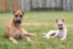 Austin LaViola dogs.jpg