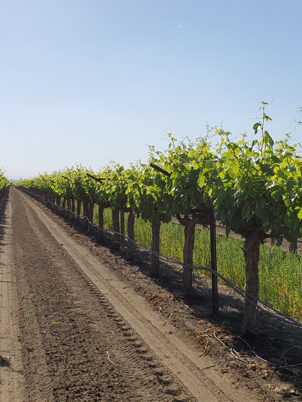 Table Grape Inspections