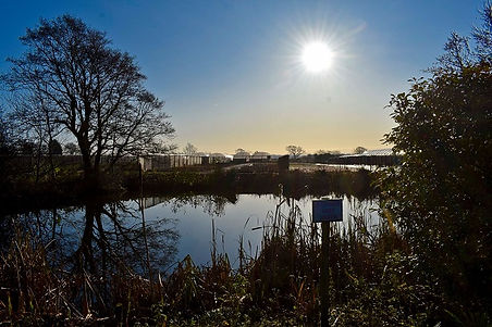 Pond Sunshine.jpg