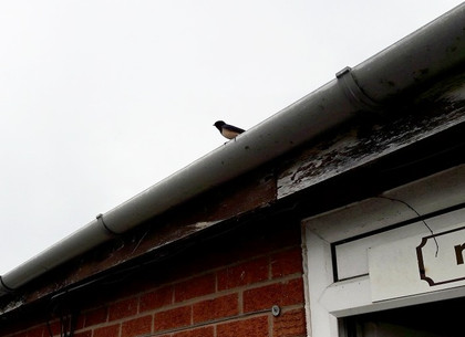 A Swallow above reception