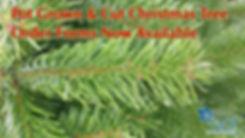 Xmas Trees promo.jpg