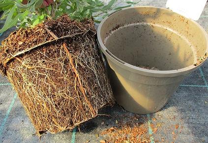 Peat free compost.jpg