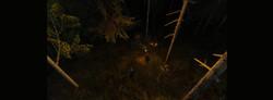 Не ходи ночью в лес...