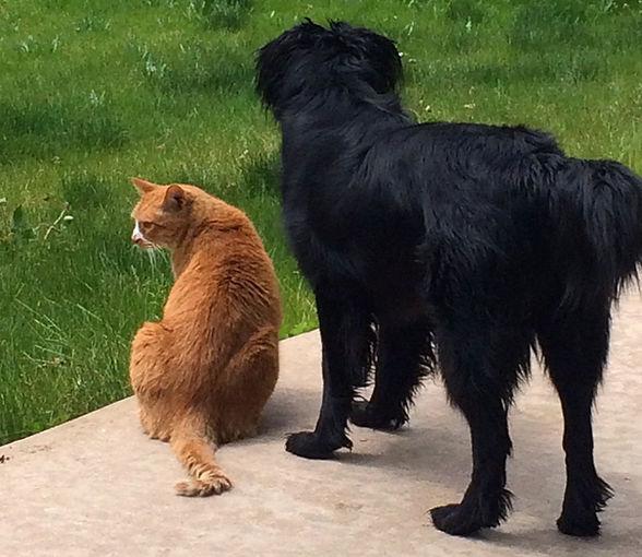Lilah and Tigger