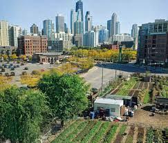 Détroit : le renouveau par l'agriculture urbaine