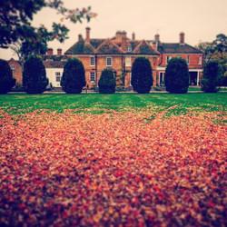 #autumnleaves #enchantedgarden #Autumn