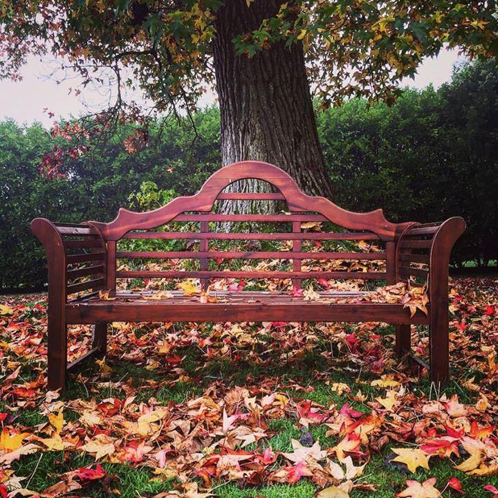 #Autumn #autumnleaves #loveautumn #firgrove #firgrovemanor