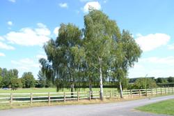 Views of our paddocks