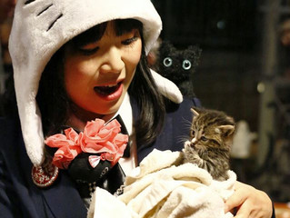 NaNa & the Happy Cats first review, ya'll!!!(=^0^=)