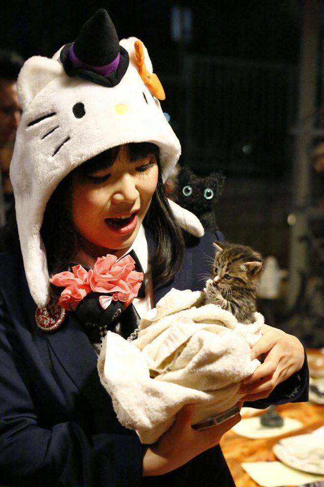 happ cats and cats.jpg