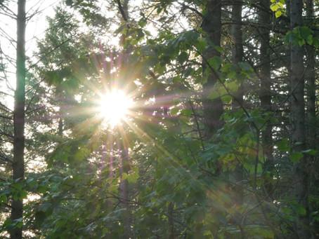 The Golden light of trees