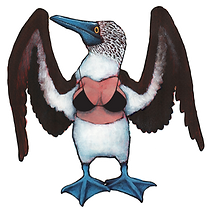 Blue footed booby(bikini no bkgrd).png