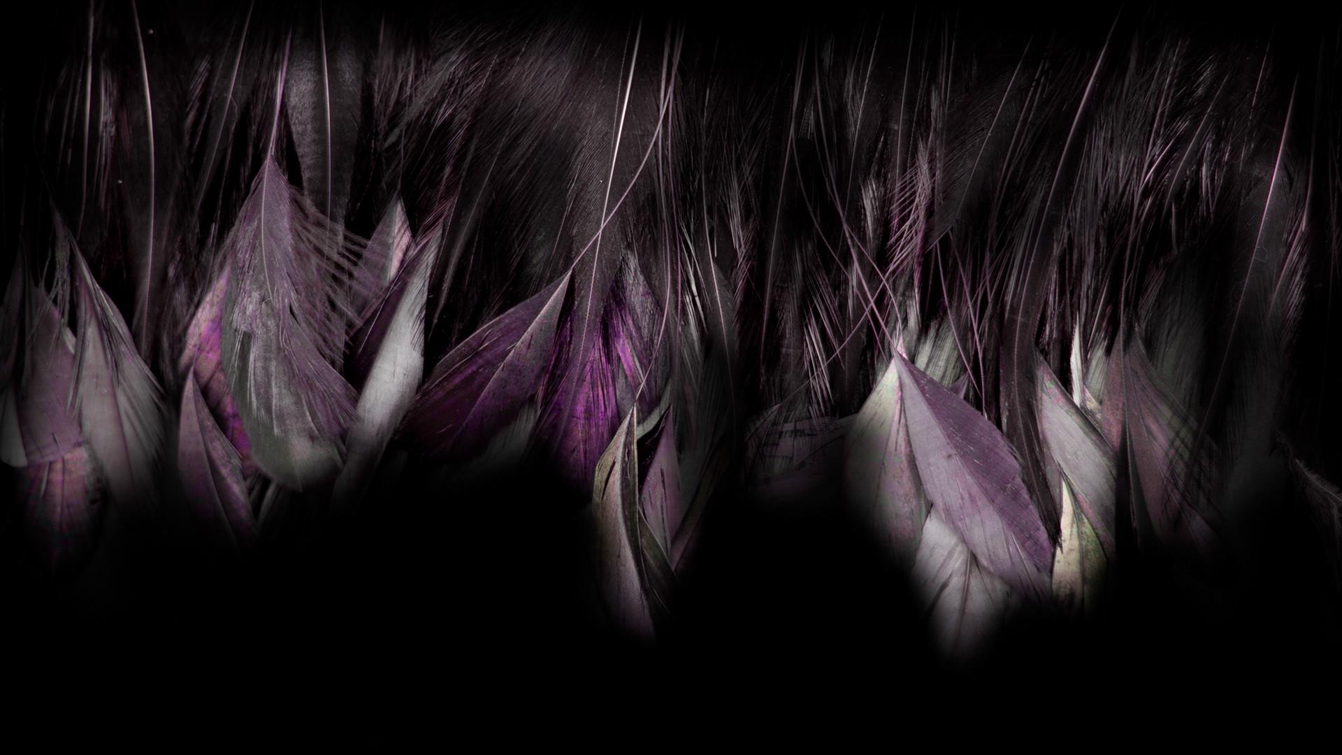edited_gz_feathers.jpg