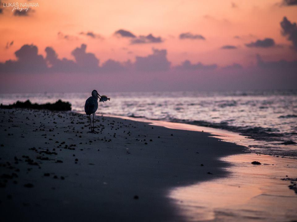 33. Thinadhoo, Maledivy