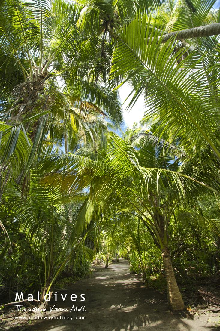 Jungle.jpg.jpg