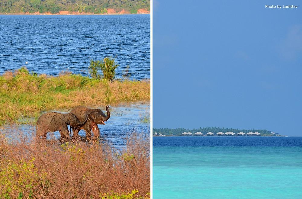 Yala - Srí Lanka a Paradise Island Resort - Maledivy