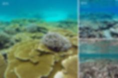 Šrnorchlování, Alif Alif atol, Maledivy