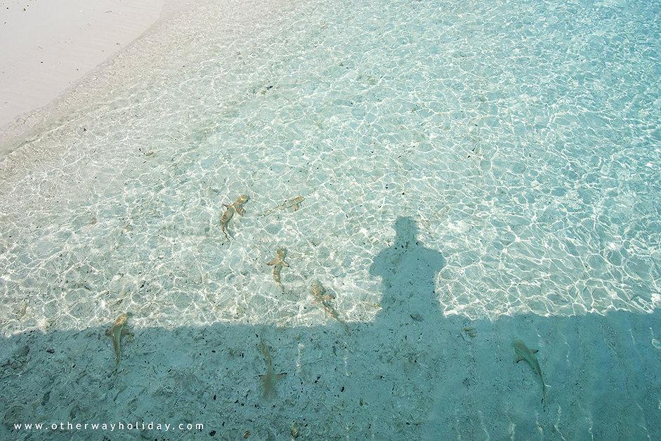 Royal Island Resort & Spa, Lucie Mohelníková, Maledivy