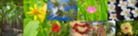 Maledivy flora a příroda