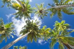 Dhigurah, Alif Dhaal Atoll