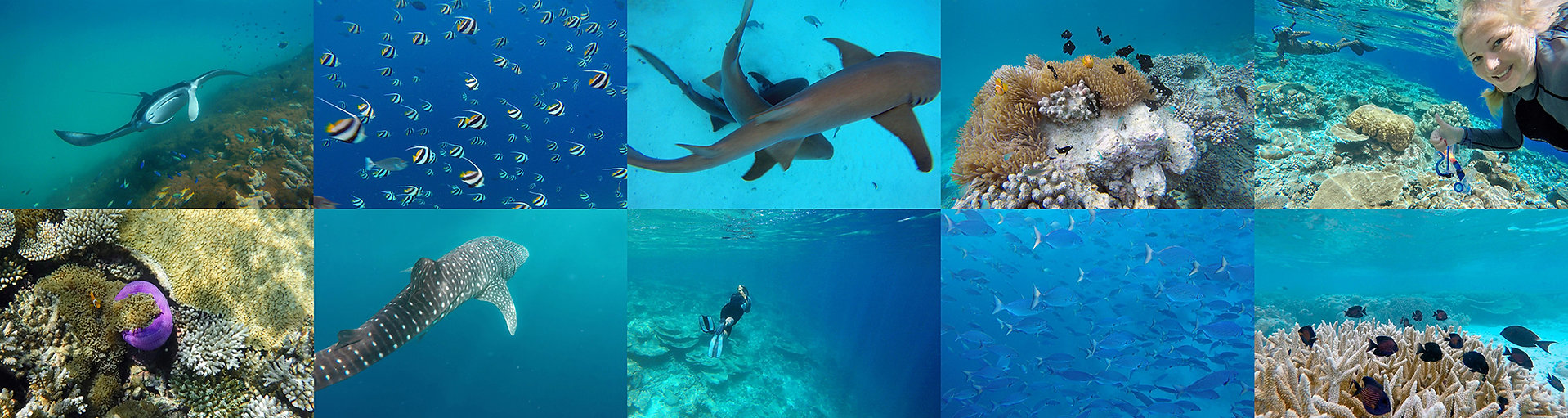 Maledivy, volené potápění - Freediving
