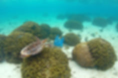 Příroda, plasty, Maledivy