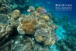 Ukulhas, Alif Alif atol, Maledivy