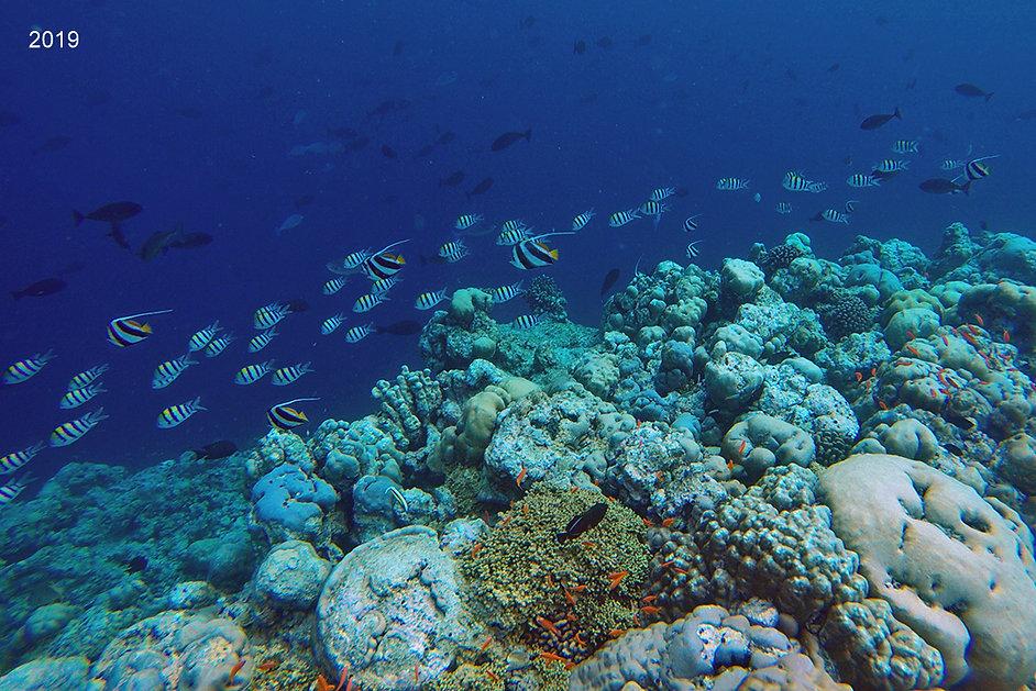 Šnorchlování, Fodhdhoo, Noonu atol, Maledivy