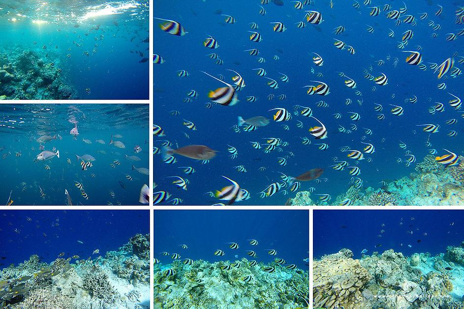 Šnorchlování na korálovém útesu Dhigga, Maledivy