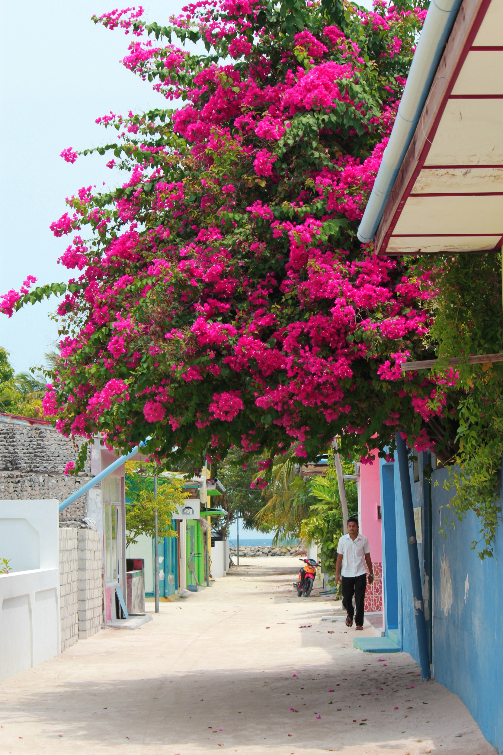Flickr - Rasdhoo Street