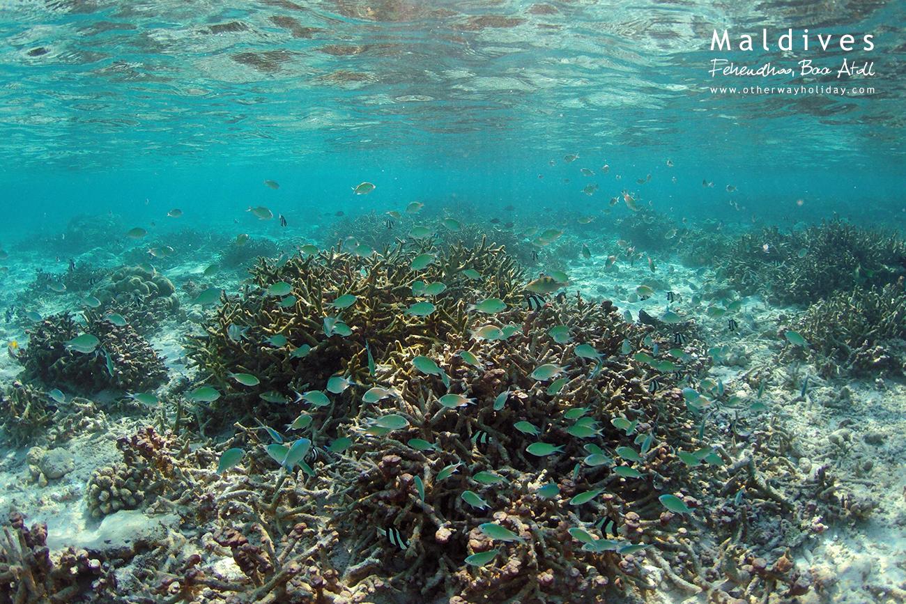 Fehendhoo, Baa Atoll, Maldives (3)