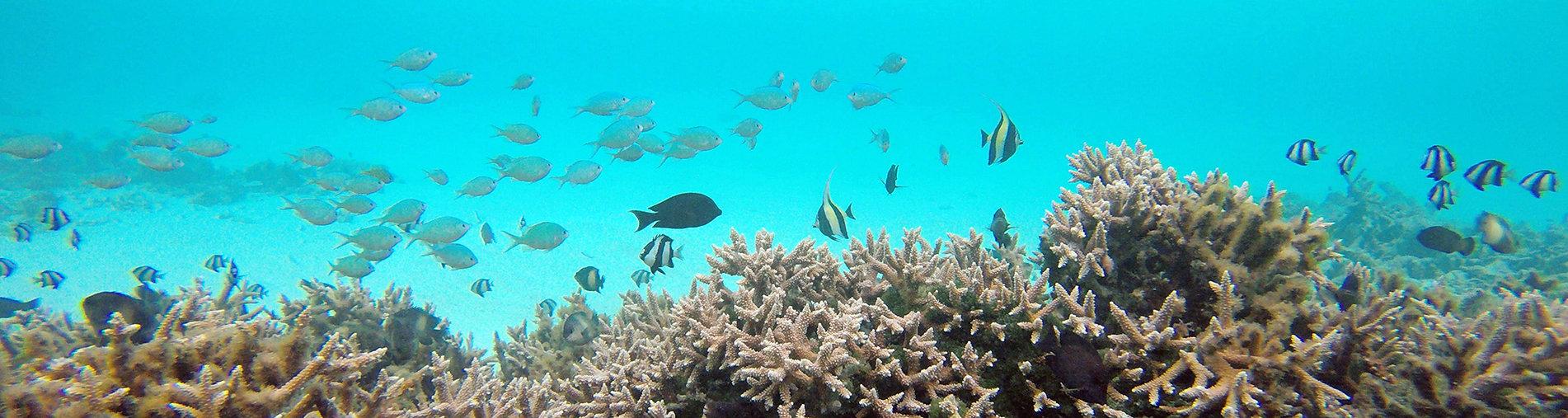 šnorchlování na Goidhoo atolu, Maledivy