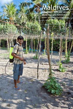 Farmář na Thoddoo