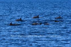 Delfíni u ostrova Dhigurah