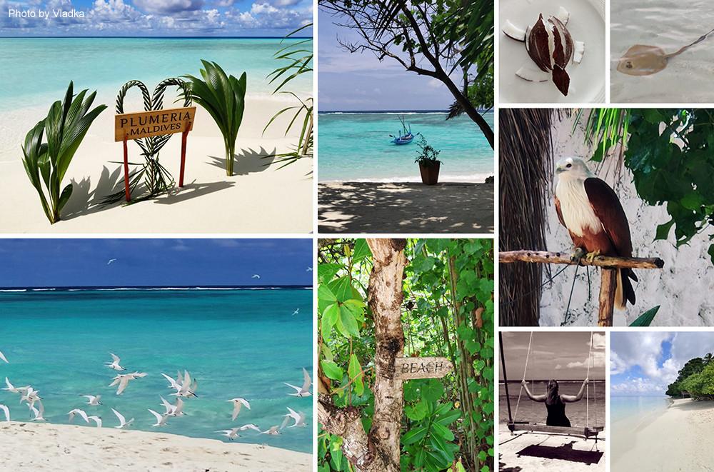 Plumeria Maldives, Boutique, Thinadhoo, Maledivy