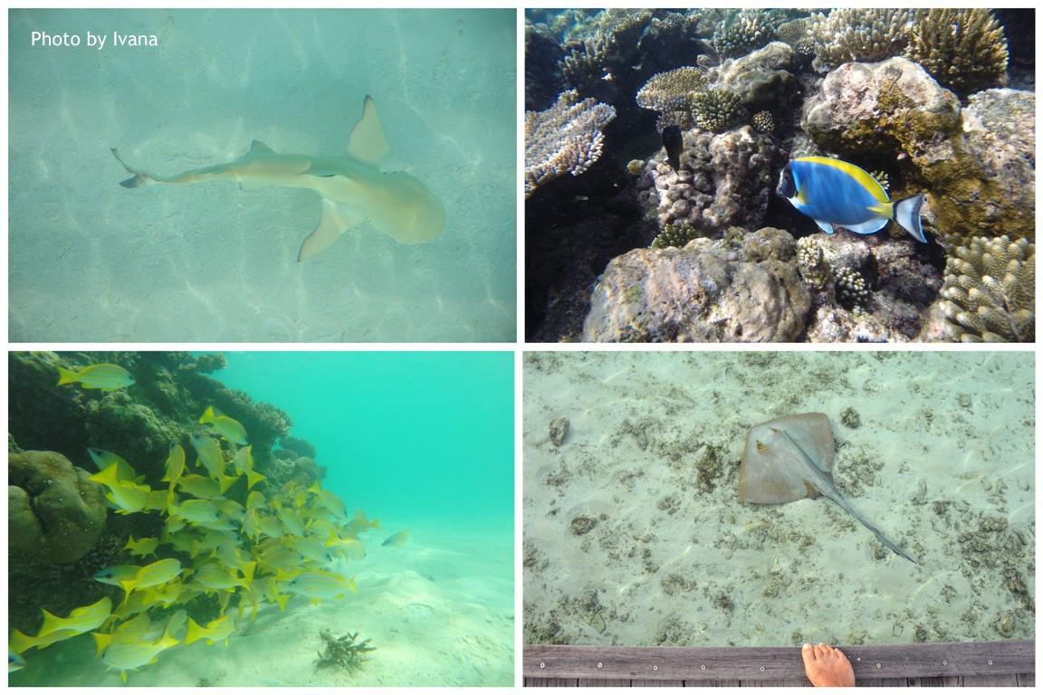 Maledivy, šnorchlování